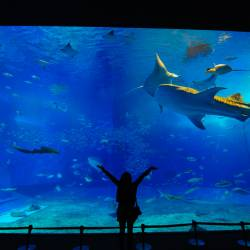 Amy's travel gallery... | Okinawa | 沖縄美ら海水族館 |